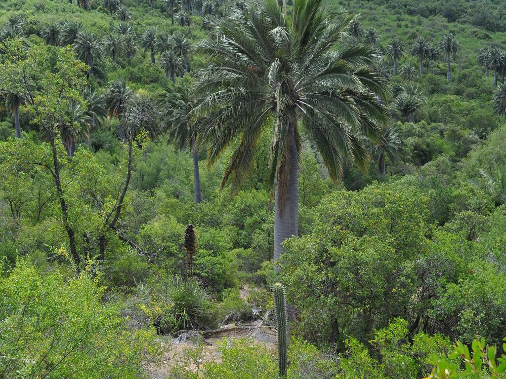 bosque esclerófilo 2